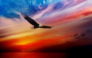 American-Eagles-Wallpaper-2